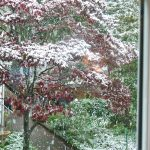 Farewell to Fall – Already?