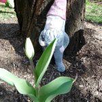 Gnome Sweet Garden Gnome