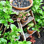 For the Birds – Stepladder Birdbath
