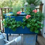 Dress Up Your Plants – in a Dresser!