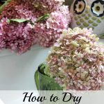 Drying Hydrangeas 101