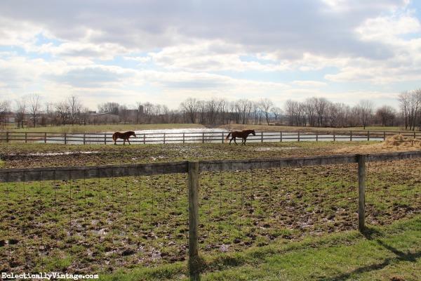 Horse farm kellyelko.com