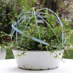 Make a Topiary Orb kellyelko.com