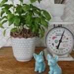 10 Minute Decorating – Dress Up Supermarket Plants