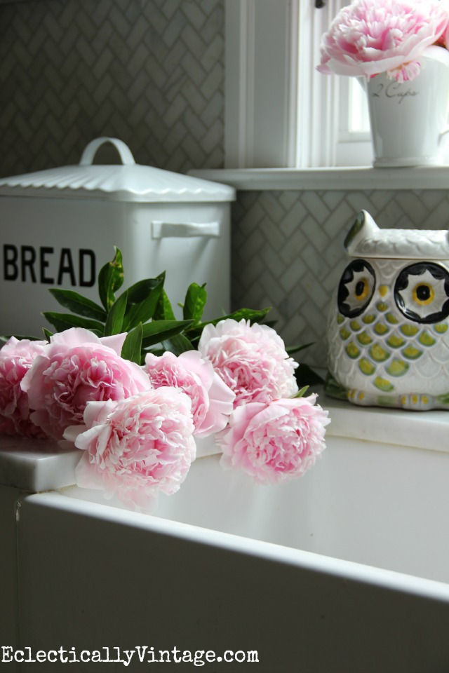 There is nothing better than a house filled with freshly cut peonies! Love these great peony growing tips and tricks kellyelko.com