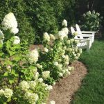 My Favorite Sun Loving Hydrangeas