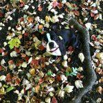 Woman's Best Friend – Treating My Dog