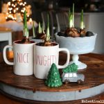Forcing Bulbs – Winter Centerpiece