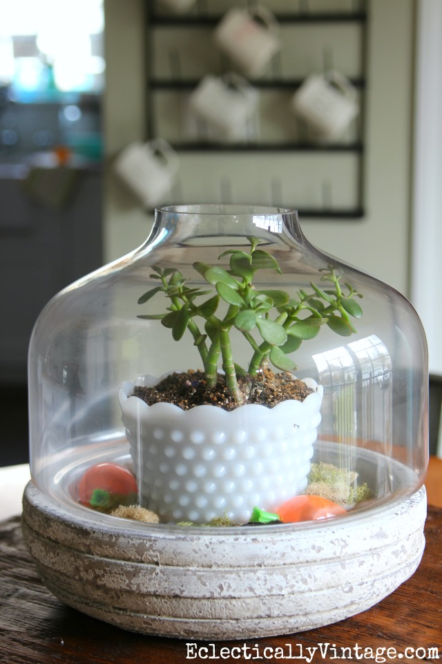 Simple terrarium - a potted plant surrounded by moss kellyelko.com #terrarium #springdecor #springcrafts #plants #houseplants #plantlady #kellyelko