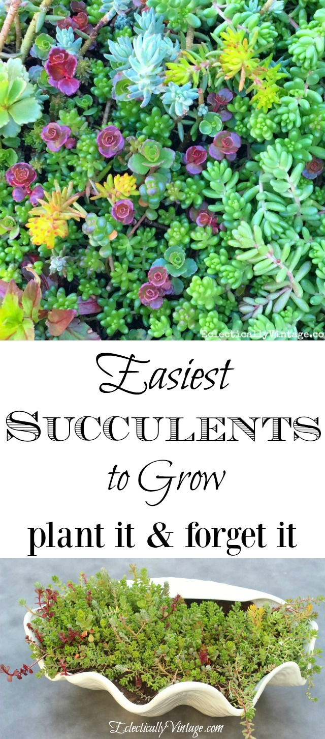 Easiest succulents to grow kellyelko.com
