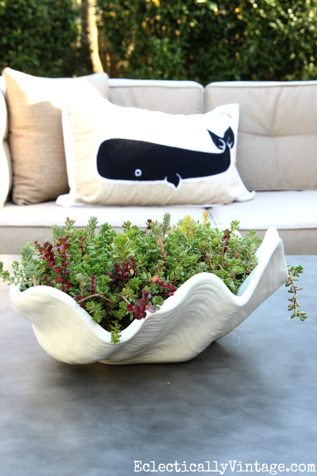 Love this clam shell filled with succulents and she has the best idea for the easiest way to plant succulents! kellyelko.com