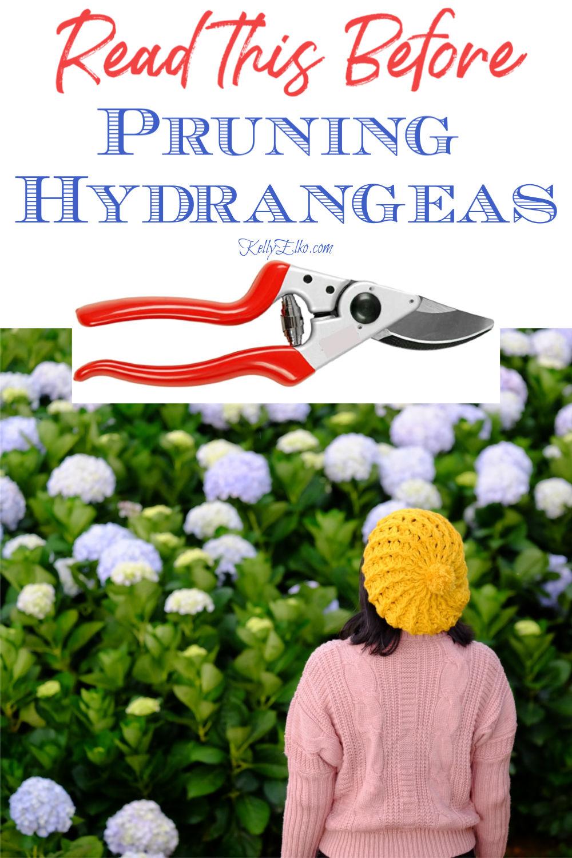 When to Prune Hydrangeas - Read this Before Pruning Hydrangeas so you can get beautiful blooms! kellyelko.com #hydrangeas #hydrangea #pruning #pruningtips #prunehydrangeas #perennials #gardener #gardens #gardening #gardeningtips #kellyelko.com