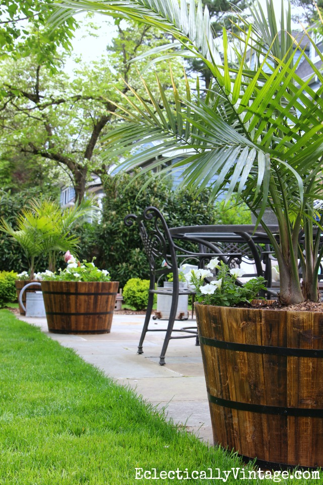 Love These Giant Whiskey Barrel Planters Filled With Palm Trees   Three  Lined Up On A