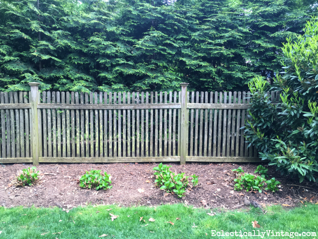 How to care for dead hydrangea branches kellyelko.com #gardening #gardeningtips #gardens #perennials #kellyelko