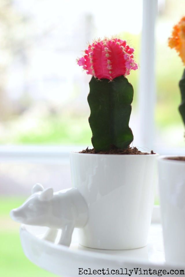 Love this little pig planter and the colorful pink cactus kellyelko.com