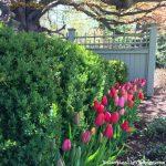 April in Snapshots