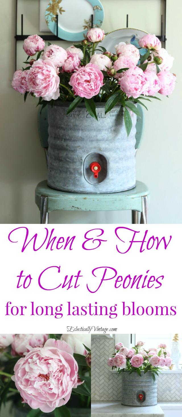 When to Cut Peonies for long lasting indoor arrangements kellyelko.com
