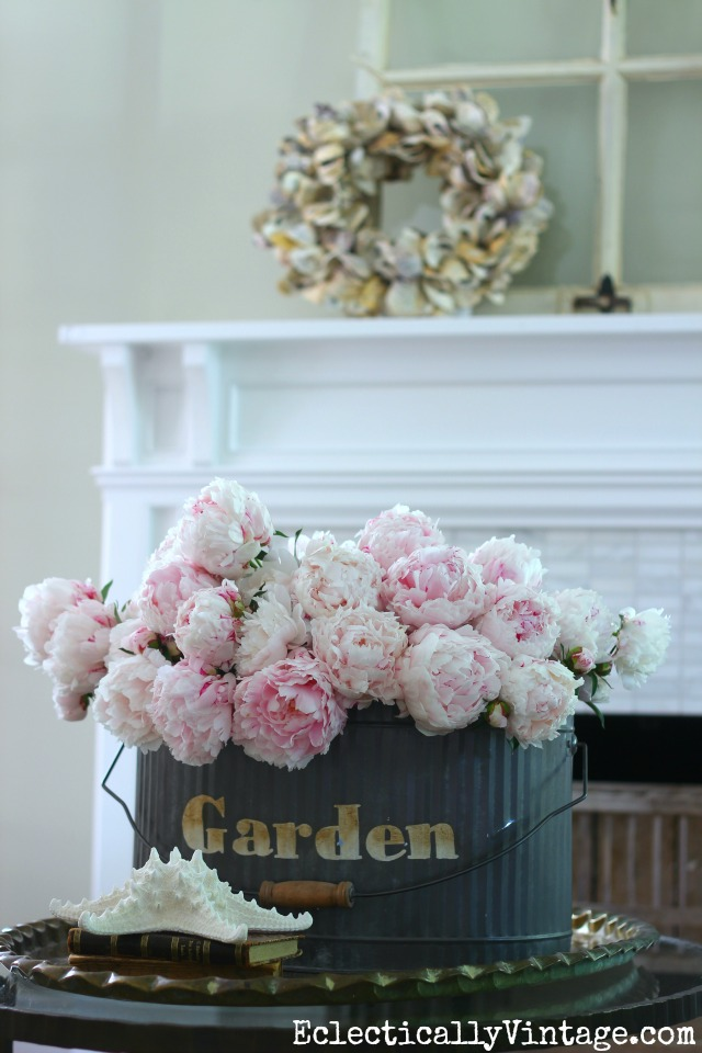 Simple Gardening Ideas - grow huge bouquets of peonies kellyelko.com #gardening #flowerarrangements #gardeningtips #gardens #vintagedecor #flowers #peonies