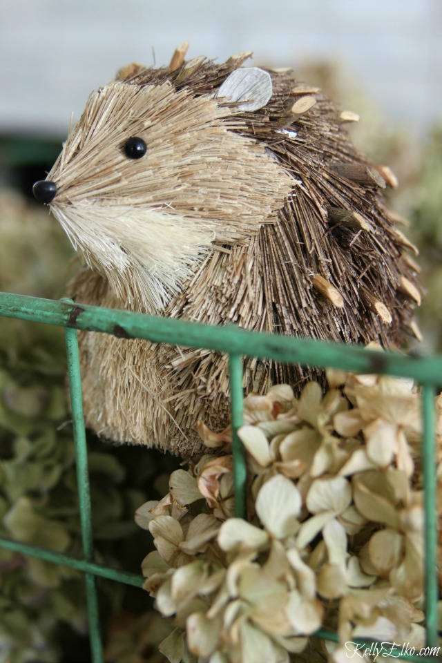 Cute little hedgehog kellyelko.com