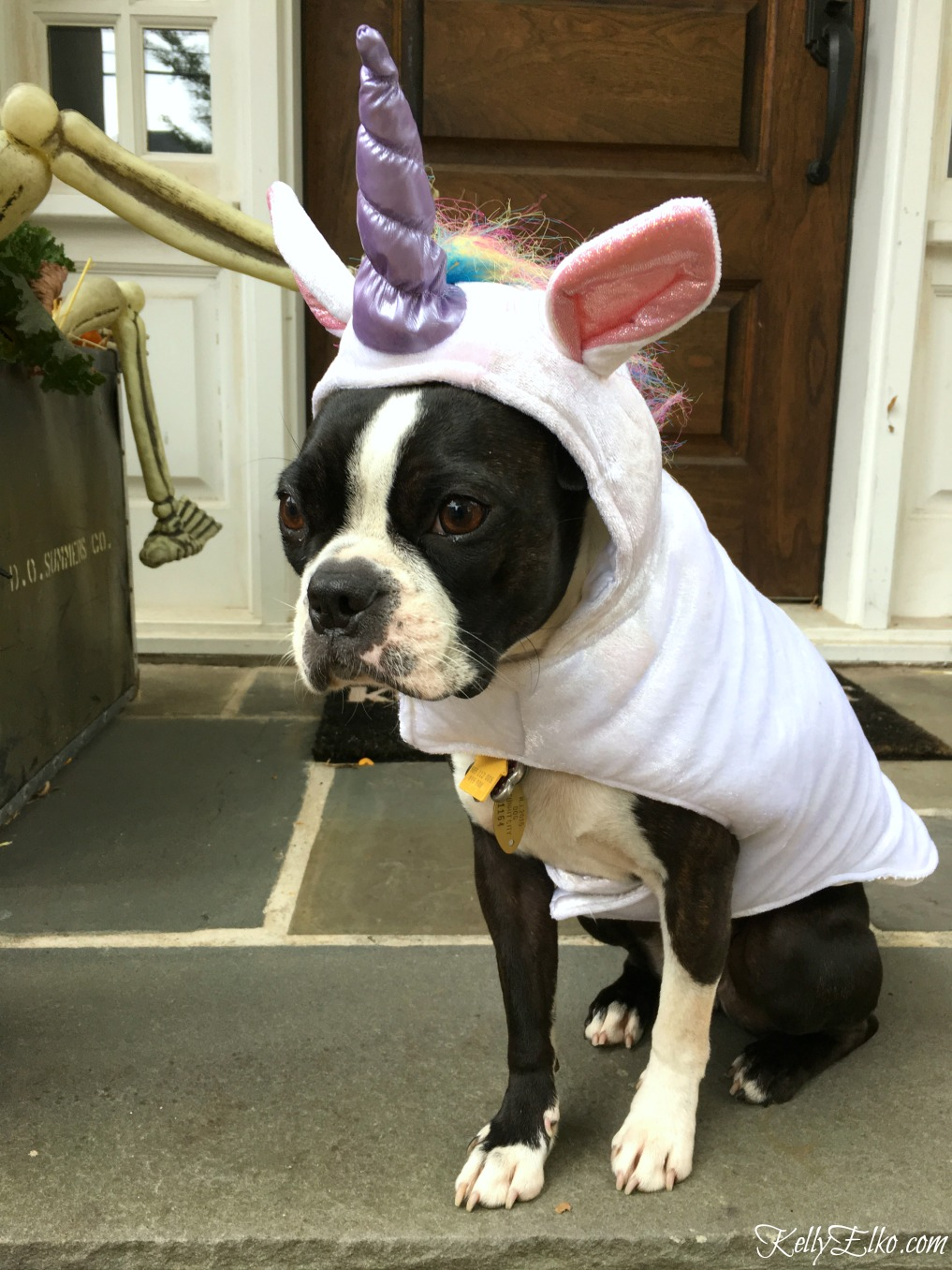 How adorable is this Boston Terrier in a unicorn costume! kellyelko.com