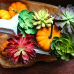 10 Minute Decorating – Fall Succulent Centerpiece
