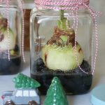 How to Grow Amaryllis in Jars