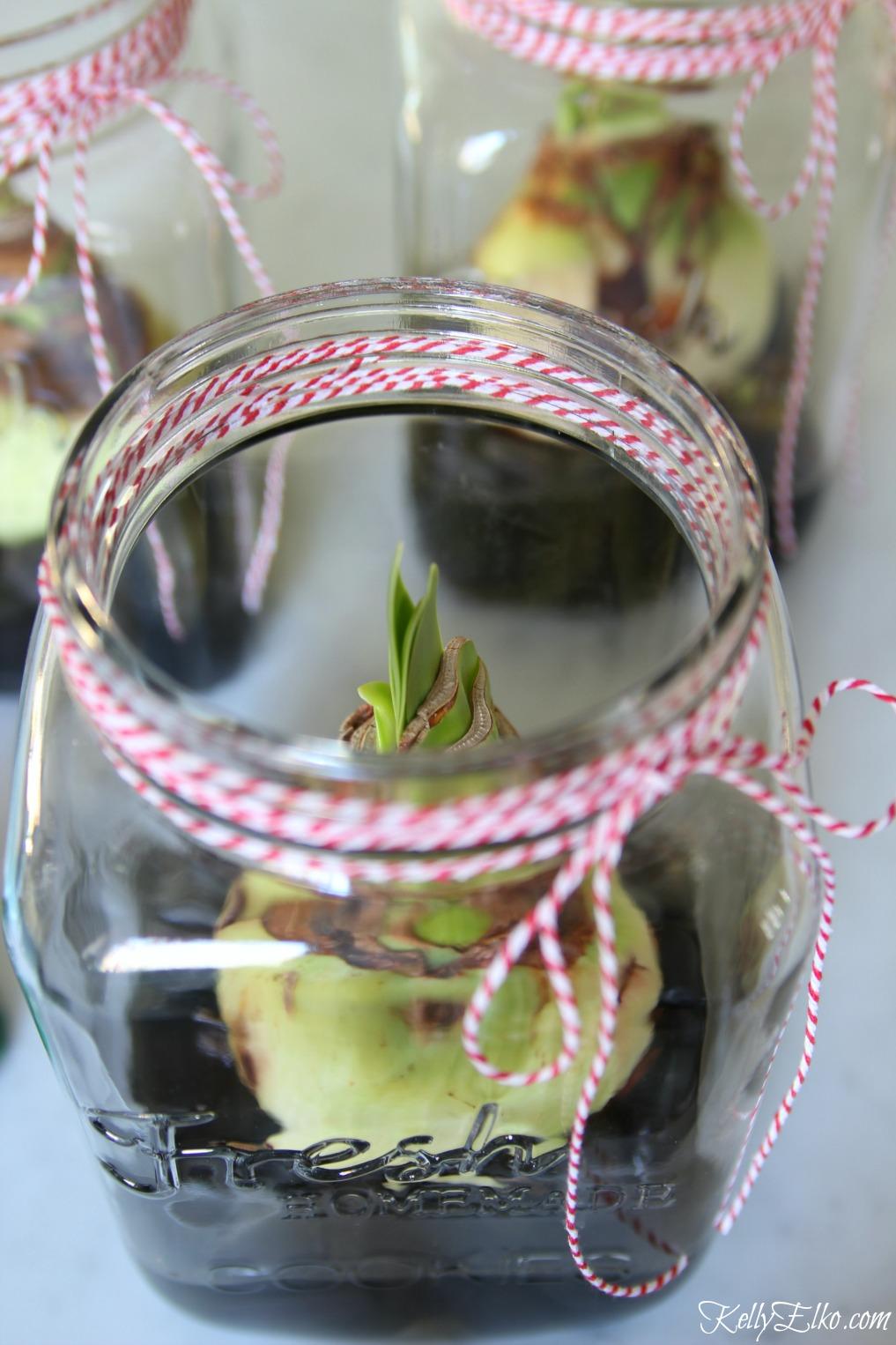 Plant a bulb without soil kellyelko.com