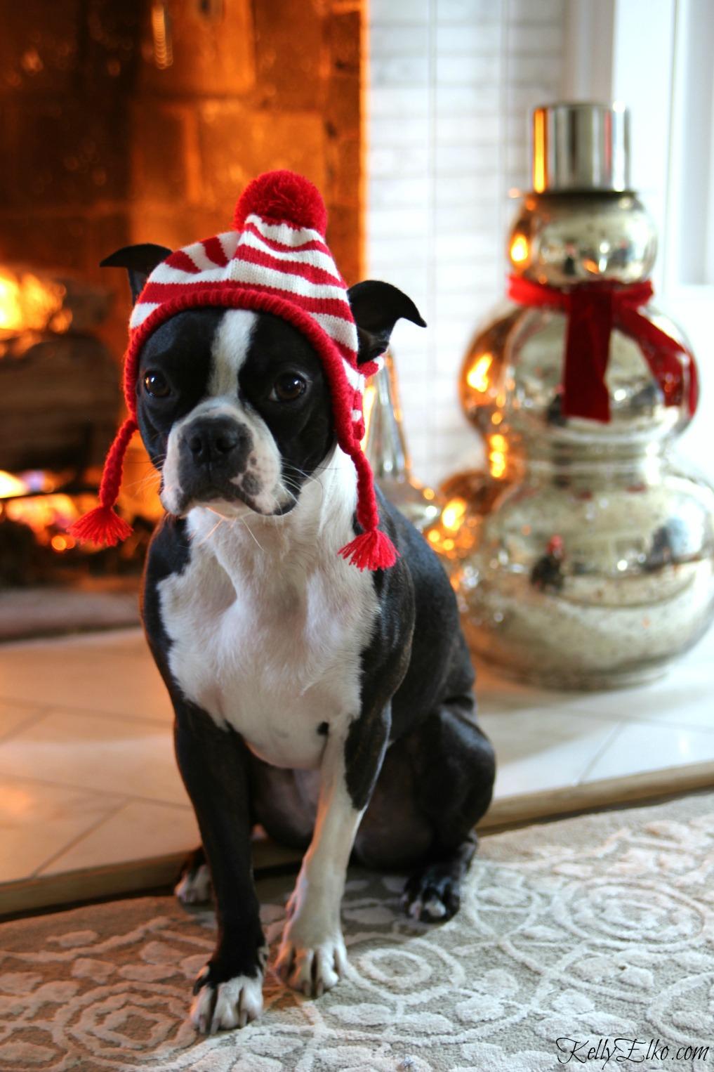 Blogger Christmas Pets and their Festive Homes kellyelko.com