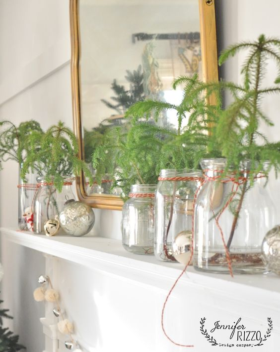 Mini trees in jars - use them for Christmas then plant them in spring