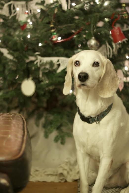 Blogger Christmas Pets and their Festive Homes