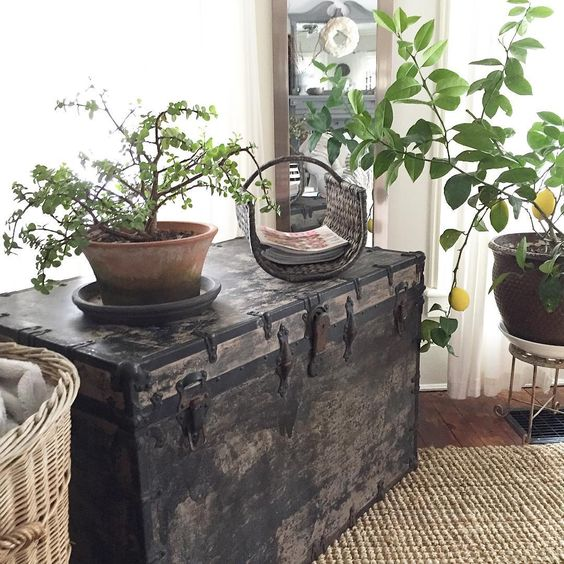 Antique trunk is perfect for displaying plants kellyelko.com
