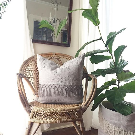 Wicker chair and fiddle leaf fig in woven basket kellyelko.com