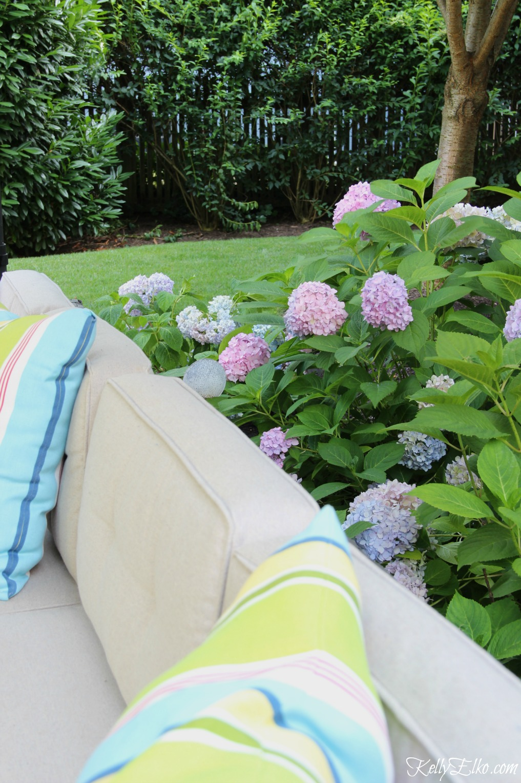 Love this hedge of hydrangeas around the patio kellyelko.com