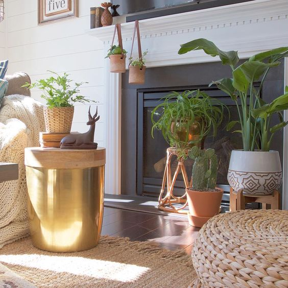 Group plants in front of a fireplace kellyelko.com