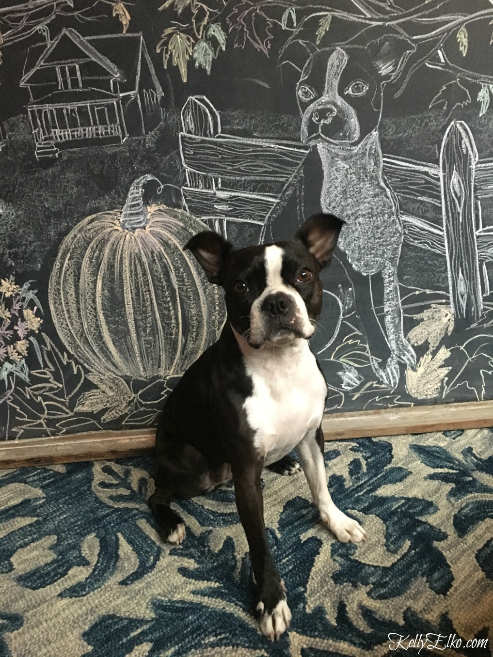 Boston Terrier chalkboard art kellyelko.com