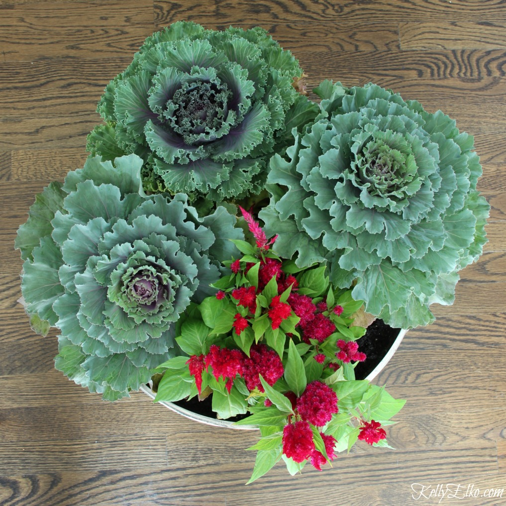 Create this dramatic cabbage fall centerpiece kellyelko.com