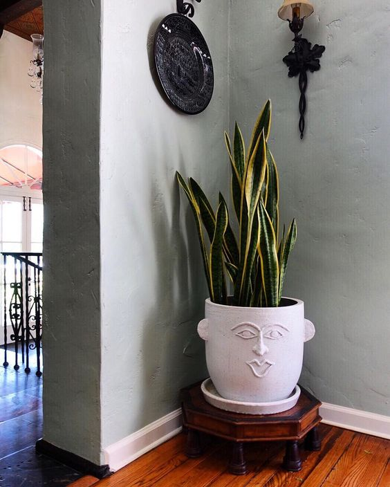 Head vase with snake plant