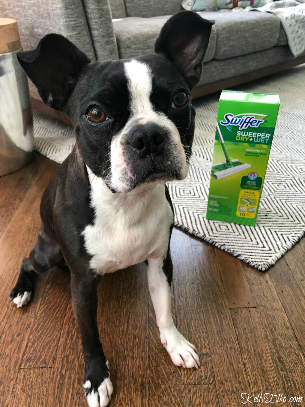 How to have a clean house with pets! kellyelko.com #ad swiffer #cleaningtips #cleanhouse #cleaning #bostonterrier
