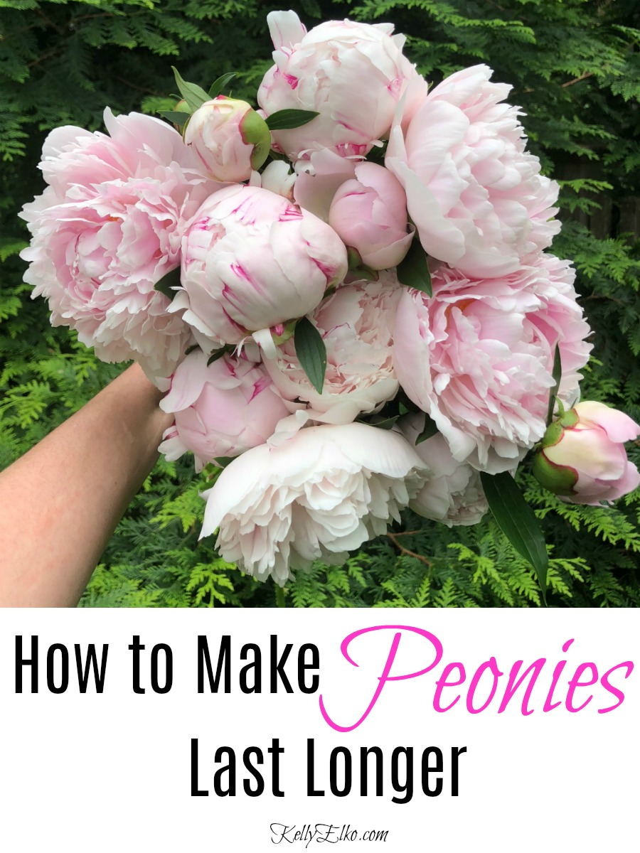 How to Make Peonies Last Longer - great tips for making sure your peonies are always at their prime kellyelko.com #peonies #peony #gardening #gardeningtips #gardens #perennials