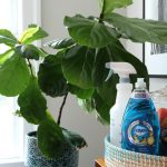 Favorite Uses for Dawn Dish Liquid kellyelko.com #cleaning #cleaningtips #cleanhouse