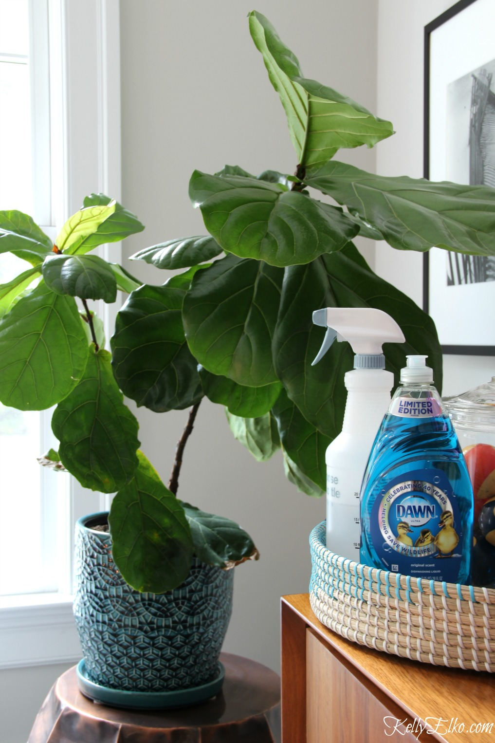 Favorite Uses for Dawn including how to keep bugs off houseplants! kellyelko.com #tipsandtricks #cleanhouse #cleaningtips #greenthumb #houseplants