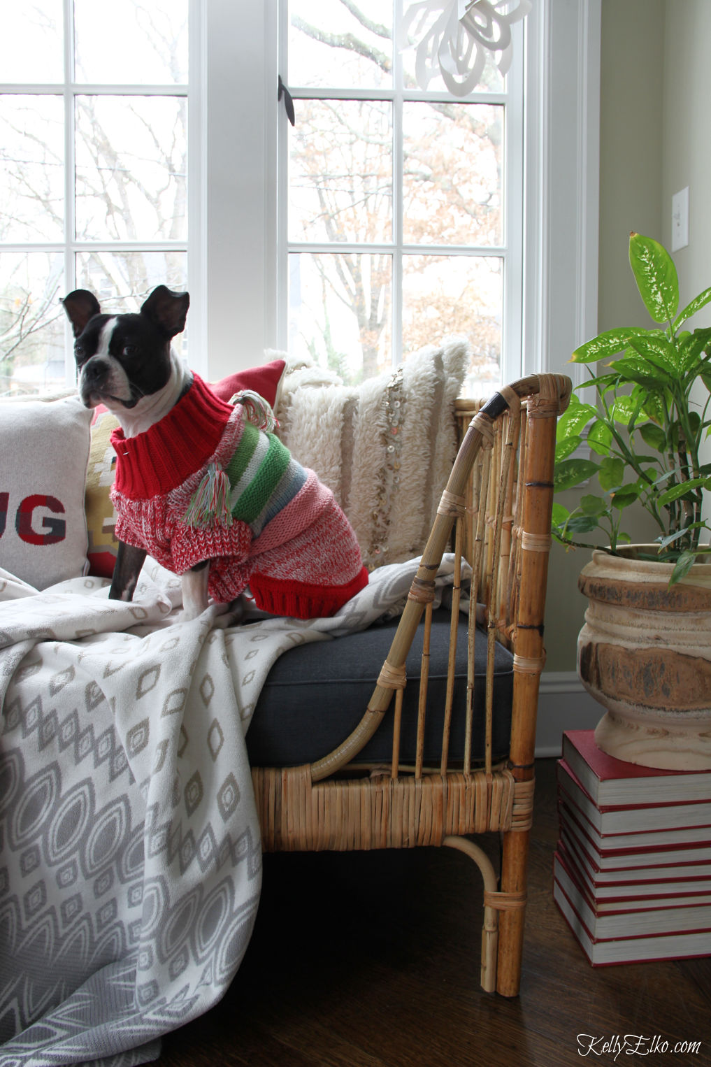 How cute is this little Boston Terrier in colorful sweater sitting on a rattan daybed kellyelko.com #bostonterrier #bohodecor #daybed #rattan #boho