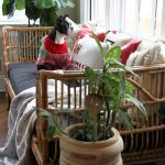 Boho Rattan Daybed in a Christmas Sunroom kellyelko.com #boho #bohodecor #interiordecor #interiordecorate #rattan #daybed #sunroom #sunroomdecor #houseplants #christmas #christmasdecor