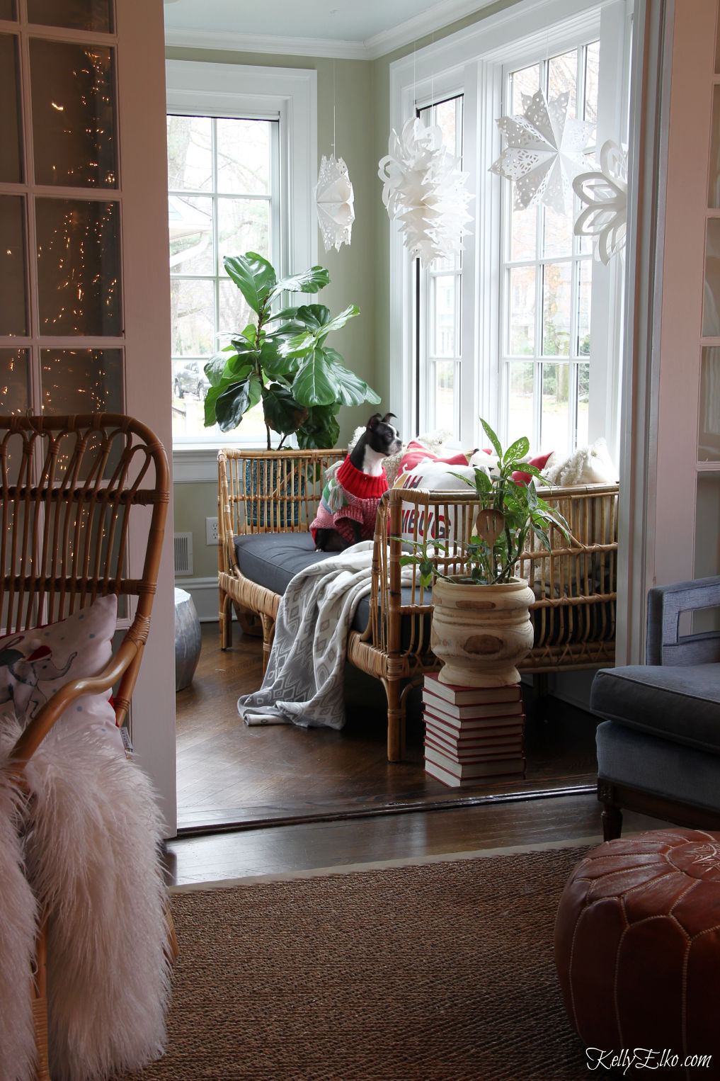 Love this sunroom decked out for Christmas with a boho rattan daybed covered in colorful pillows and cute paper snowflakes in the window kellyelko.com #bohodecor #bohodecorating #rattan #daybeds #sunroom #sunroomdecor #plantlady #houseplants #interiordecorate #interiordecor #christmas #christmasdecor #bostonterrier