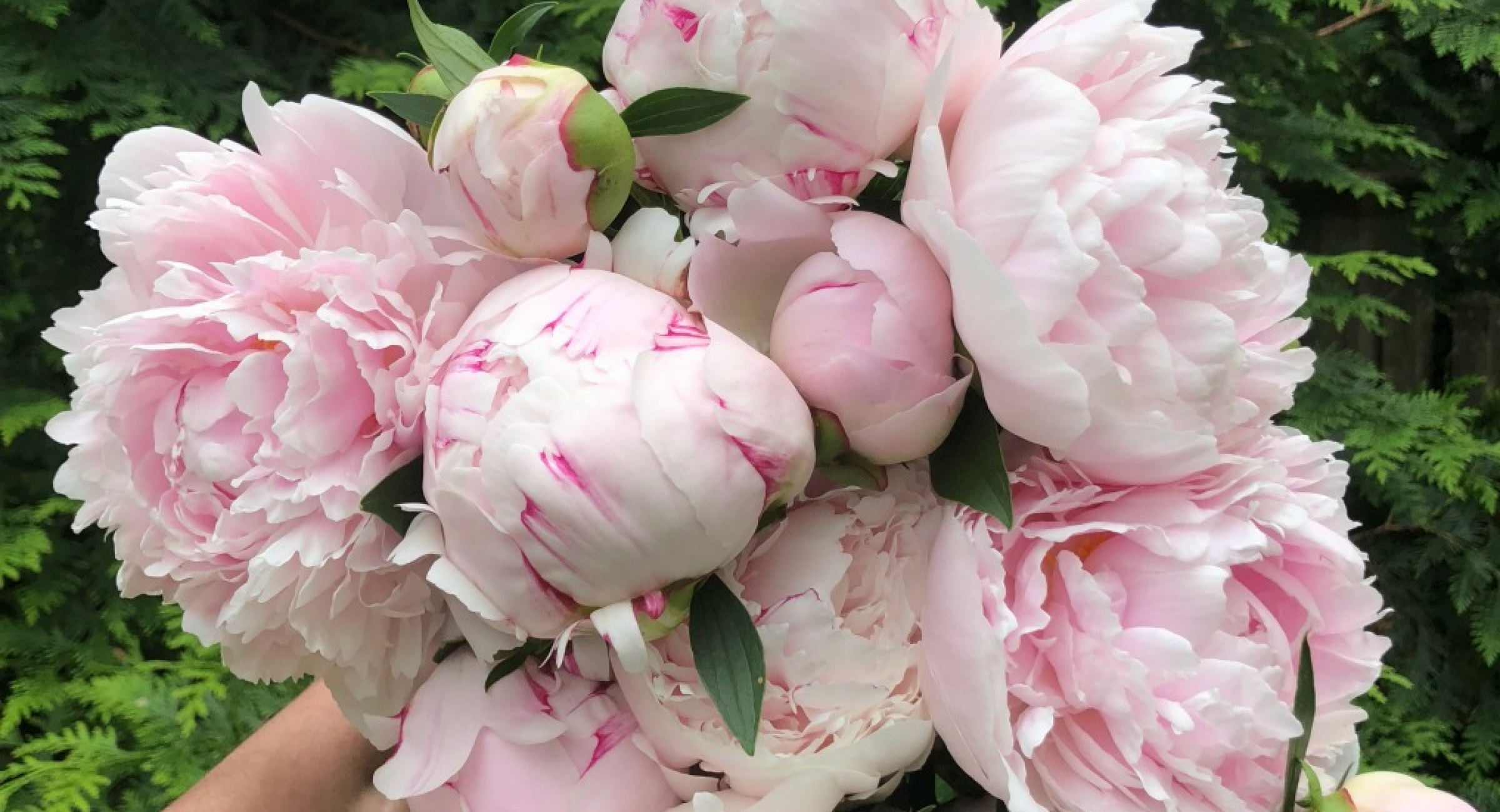 giant-bouquet-peonies