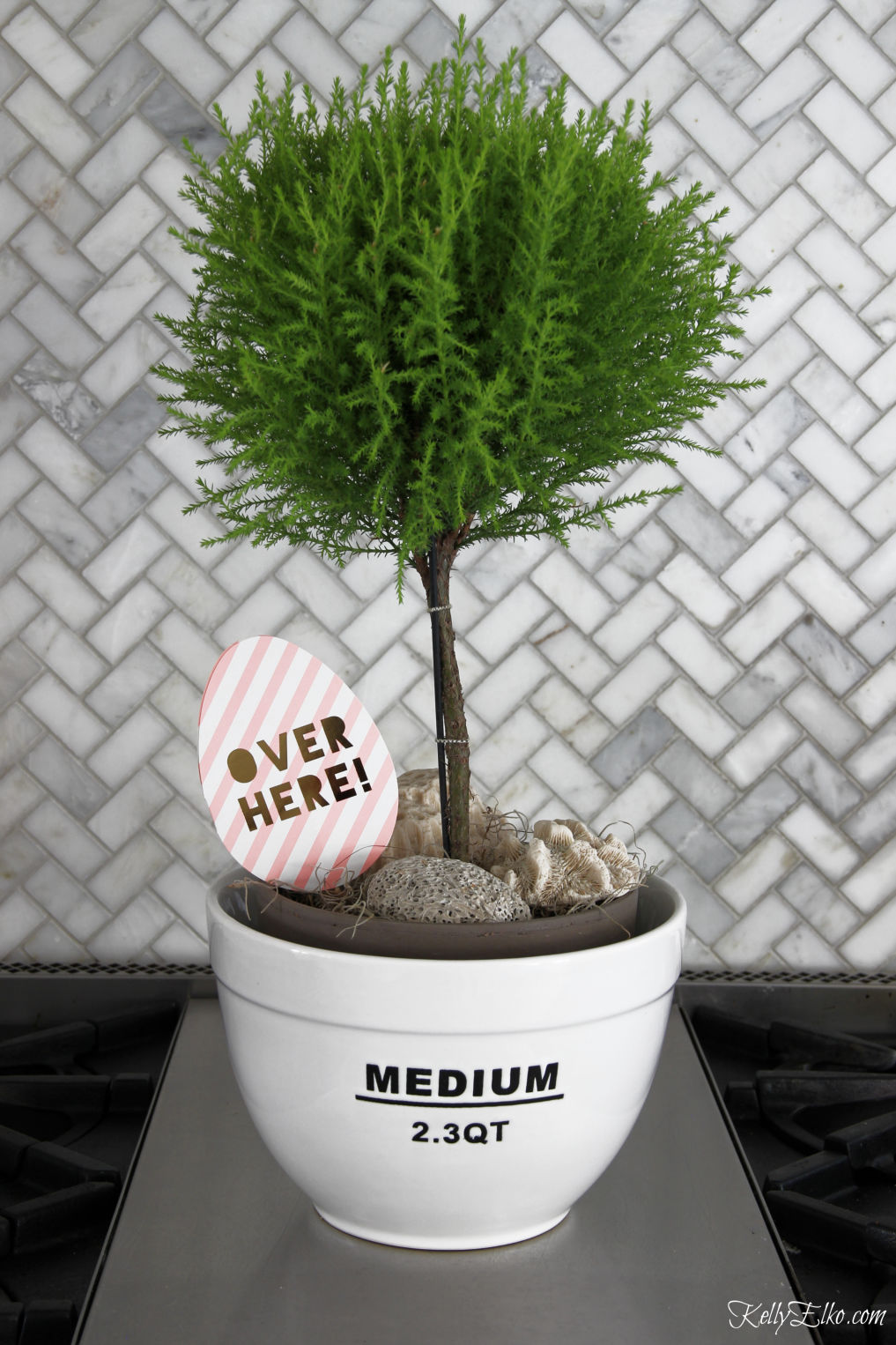 Love this topiary displayed in a kitchen bowl kellyelko.com #plants #indoorplants #plantlady #topiary