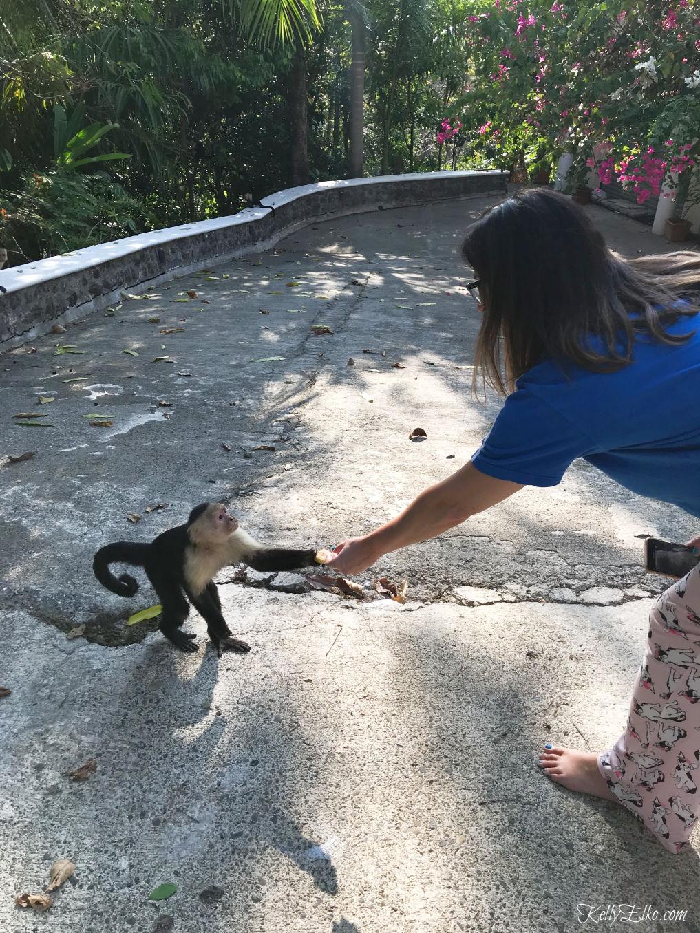 52 Weeks of Yes - hand feed wild monkeys! kellyelko.com #travel #monkeys #costarica #vacation #travelblog #52WeeksofYes