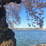 Weekend in Washington DC kellyelko.com #washingtondc #travel #travelblogger #vacation #cherryblossoms