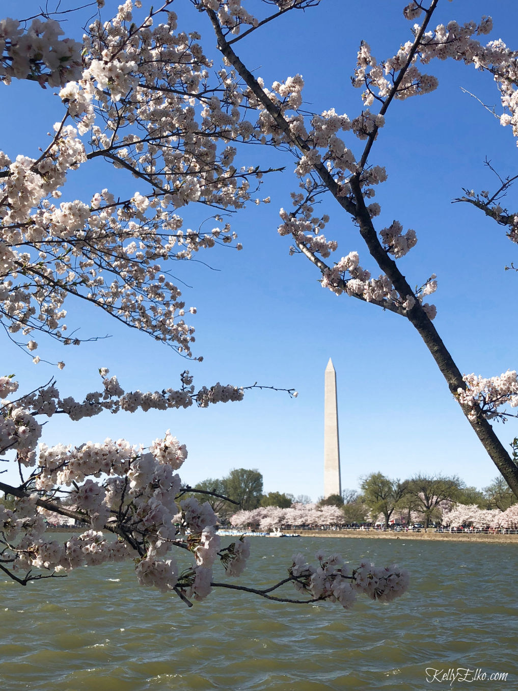 Weekend in Washington DC kellyelko.com #travel #travelblogger #washingtondc #dc #vacation #familytravel #getaway #escape #cherryblossoms
