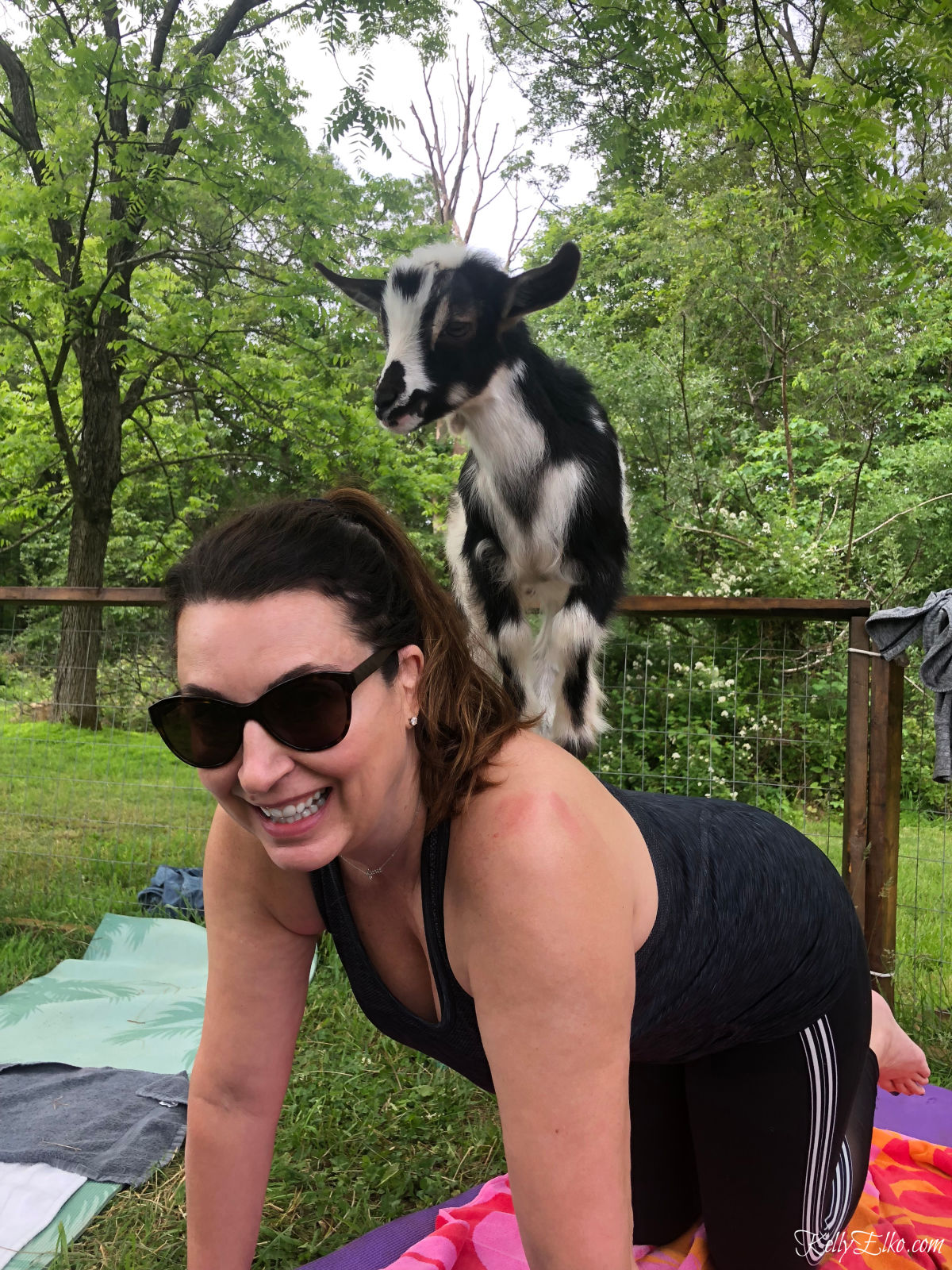 Have you tried goat yoga? Learn all about it kellyelko.com #52weeksofyes #goatyoga #selfcare #yoga